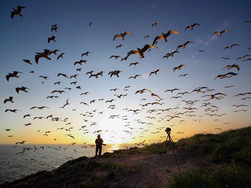 海驴岛上成群的海鸥