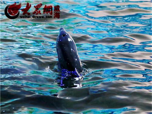 神雕山野生动物园海豚宝宝降生了 萌呆的亲不够