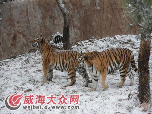 神雕山野生动物园动物其乐融融