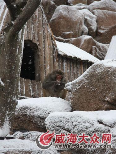 地下冬眠动物简笔画