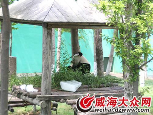 网友畅游西霞口野生动物园 体验回归大自然感受