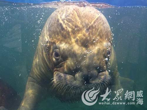 威海这些萌萌的海洋动物
