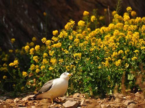 摄影师镜头下的海驴岛,美得让人震撼!