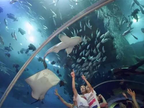 神游海洋世界是山东华夏文化旅游集团于2013年投资4.