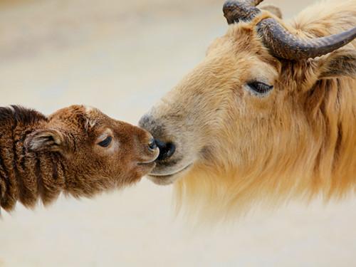 下载中小动物图片