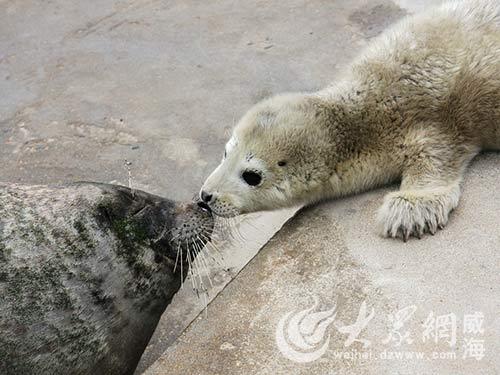 西霞口动物园海豹