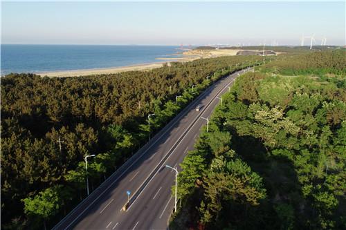 《海边黑松林观海大道》邢燕图片