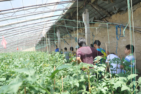 小学生去参观蔬菜大棚,了解蔬菜生产过程