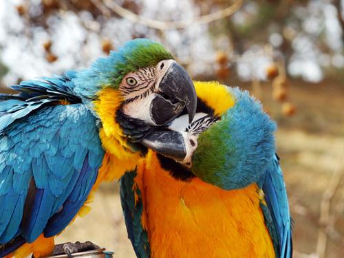 颜色艳丽的鹦鹉_神雕山野生动物园海驴岛